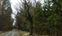 013-kwiecien-2012